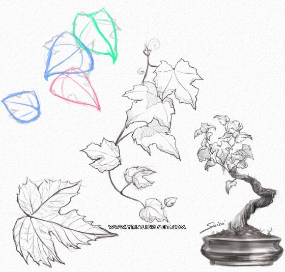 news-2011-09-22-gribouillis-feuilles-vignes-bonsai