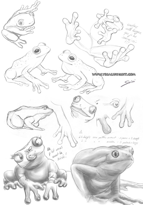 news-2013-02-12-croquis-grenouilles