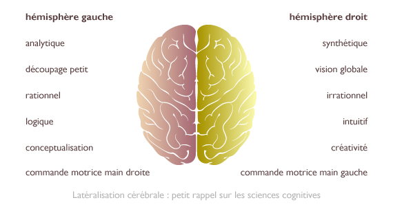 news-2013-06-12-vecto-lateralisation-cerebrale-hemisphere