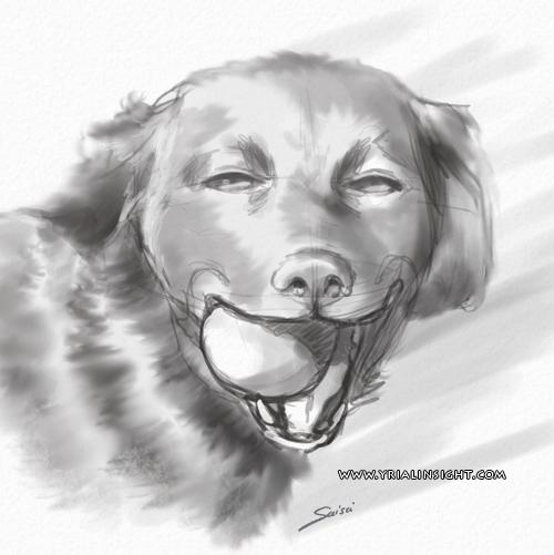 news-2015-11-04-etude-de-la-nature-yrialinsight-chien-saisei