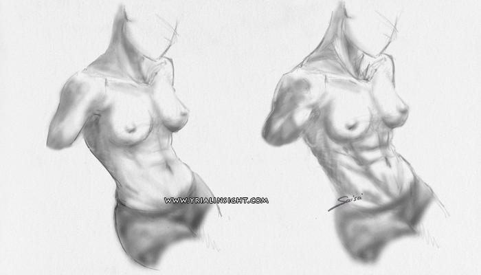 news-2016-06-01-croquis-tronc-femme-fitness-vs-musulation