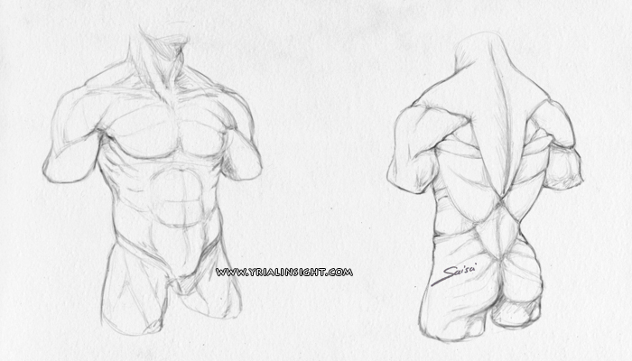news-2016-06-01-croquis-tronc-homme-musculation