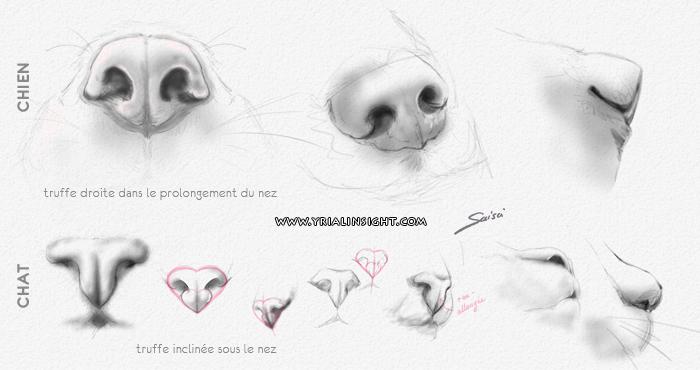 news-2016-06-05-quel-nez-truffes-canines-felines