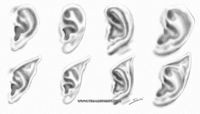 news-2016-07-01-oreilles-elfe-normales-2-cote