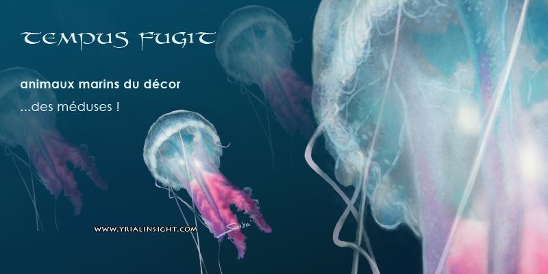 tempus-fugit-colo-animaux-meduse