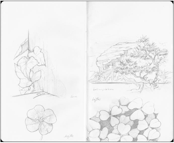 croquis de lierre, trèfles & buis taillés en plateau