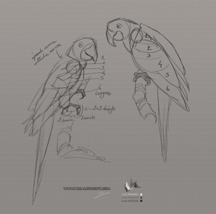 croquis de perroquets - étude de la nature avec rangées de plumes