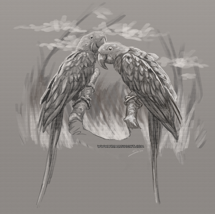 croquis de perroquets - couple 01 - étude de la nature