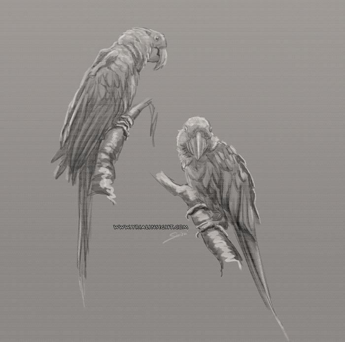 croquis de perroquets - couple 02 - étude de la nature