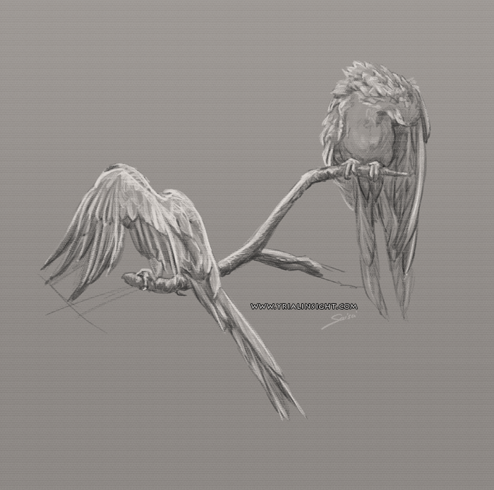 croquis de perroquets - couple 03 - étude de la nature