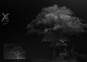 esquisse d'arbre de nuit, éclairage par dessus